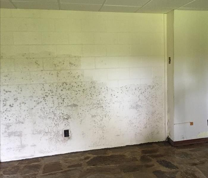 Moldy Basement in Cookeville Before