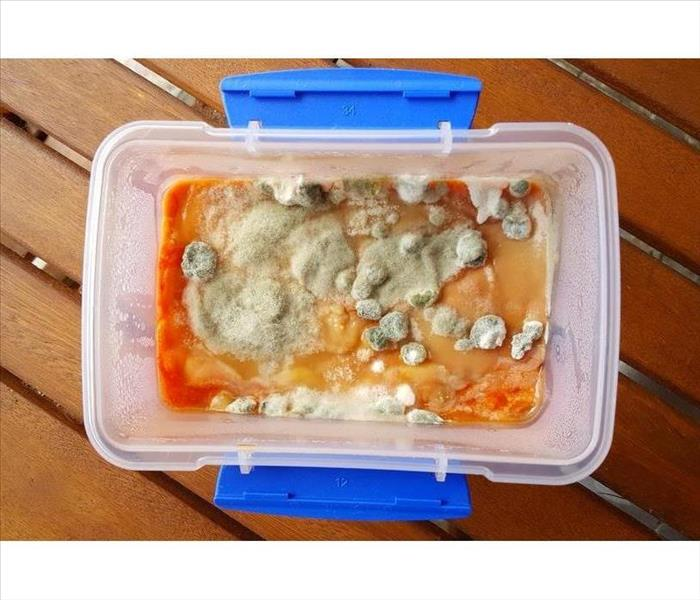 Food in a plastic container with mold